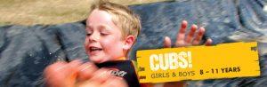 cubs image